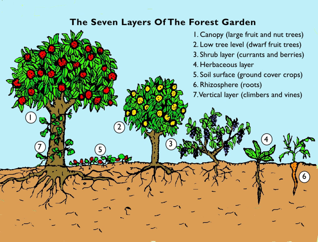 The Seven Layers of The Forest Garden